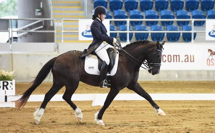 Outstanding Talented and Safe FEI Dressage Pony