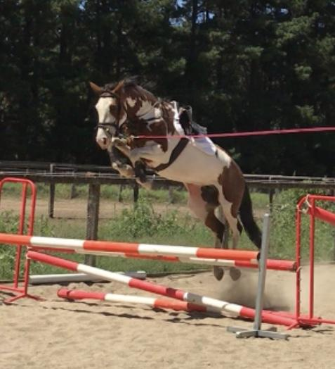 10 yo Paint x Clydie mare with incredible jump
