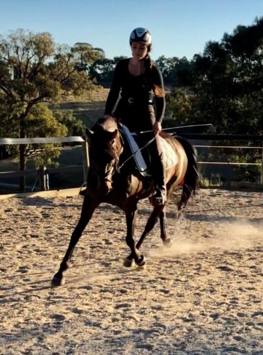 Sweet Australian Riding Pony - Urgent Sale