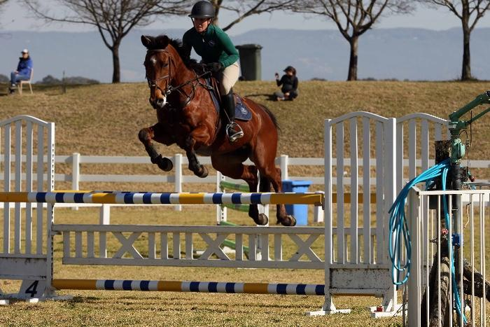 Talented dressage/eventing gelding
