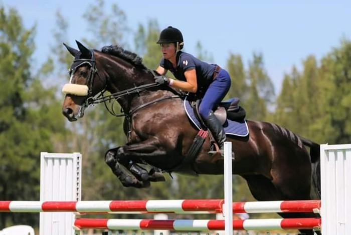 Show jumper - 16.2hh Warmblood mare 18yo