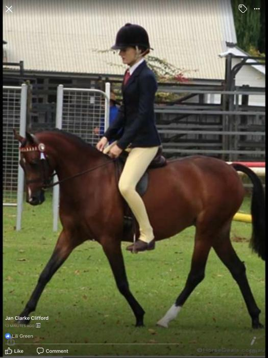 SOLD. Beautiful Show Pony
