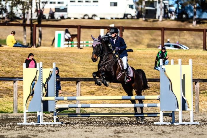 Outstanding showjumping warmblood mare