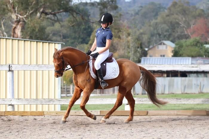 Stunning young show/dressage pony