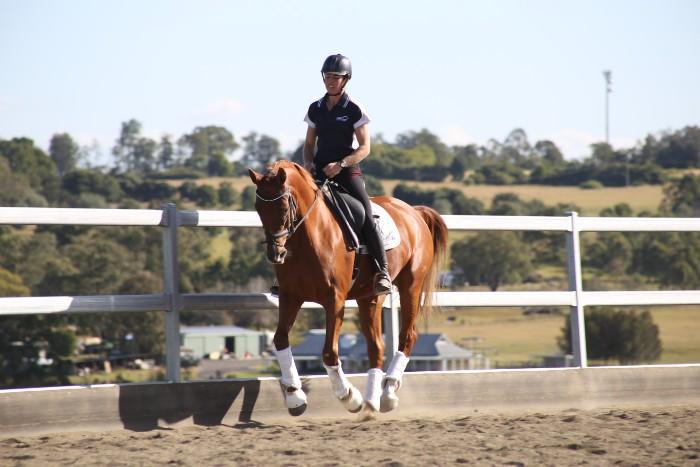 Exceptional Arabian warmblood performance mare