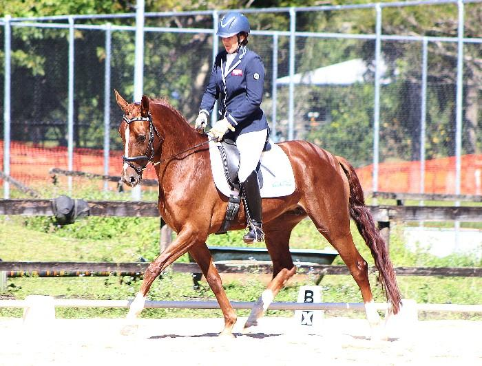 Dressage Champion or could be a Show Hunter star