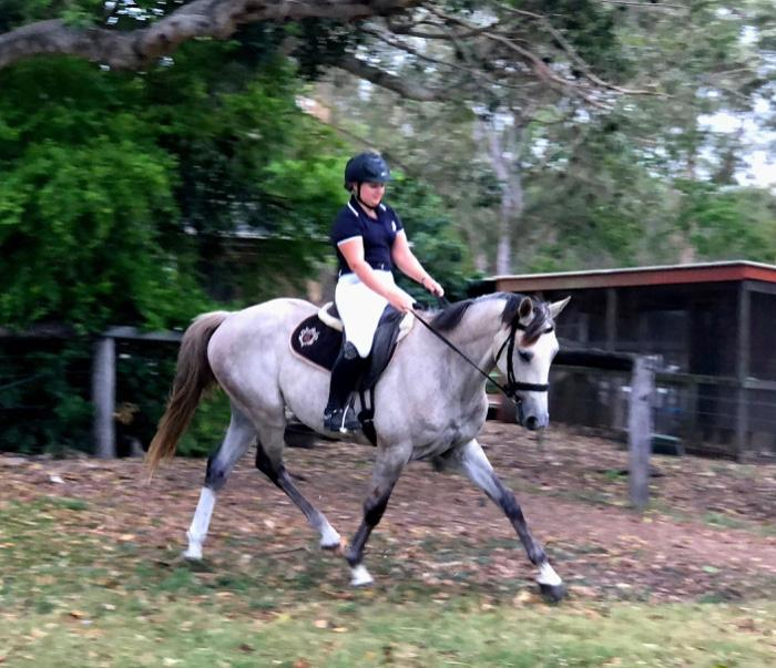 Young & Talented Performance Gelding