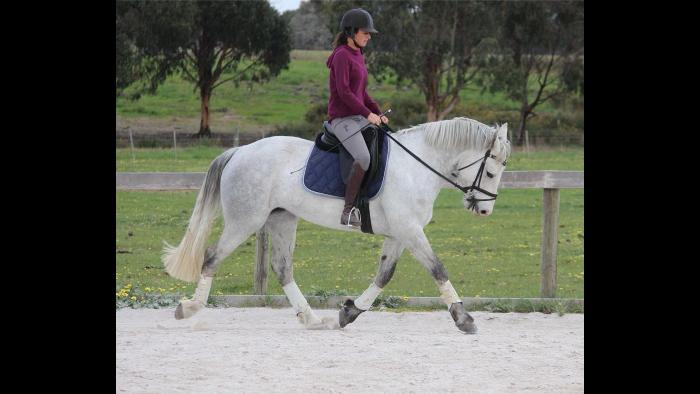 Icarus Regan lovely quiet RID 5 yr old mare