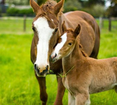 Whitney and Renegade Z Filly.jpg