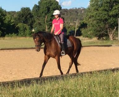 Dressage Lesson December 27th 2018