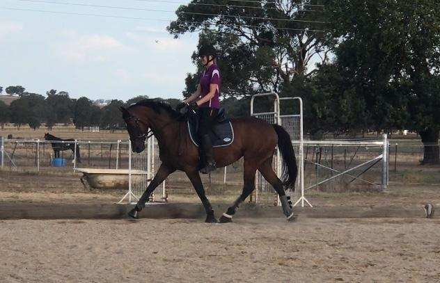 Super Trainable Young Mare!!