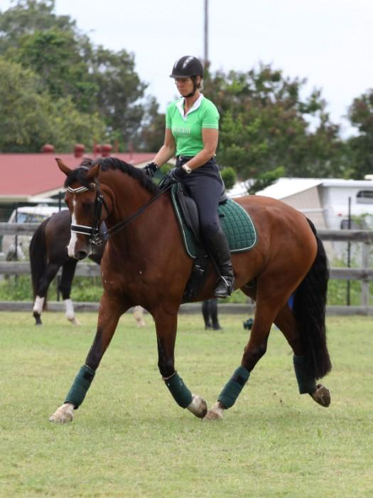 Medium/Advanced Dressage 12yo gelding