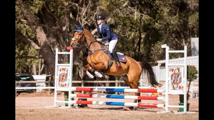 DVZ TIFFANY - EVENTING MARE FOR SALE
