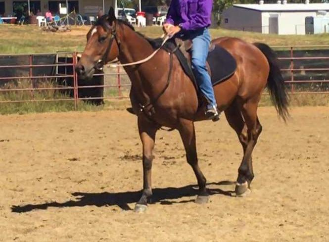 EOI lease Bay TB Gelding