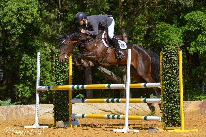 Quailty European bred mare - SJ, Event or Dressage
