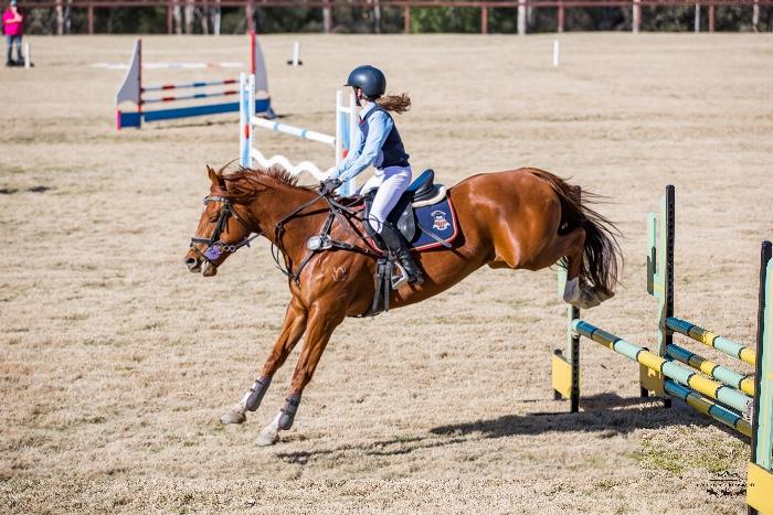 Warmblood performance mare - breed or compete.
