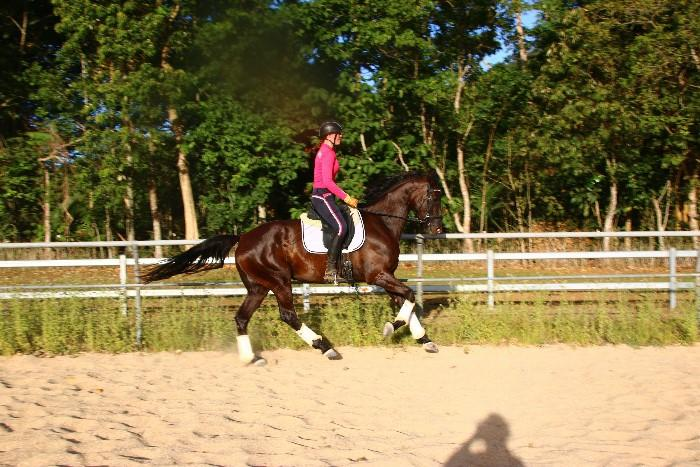 Talented Warmblood Mare 6yo