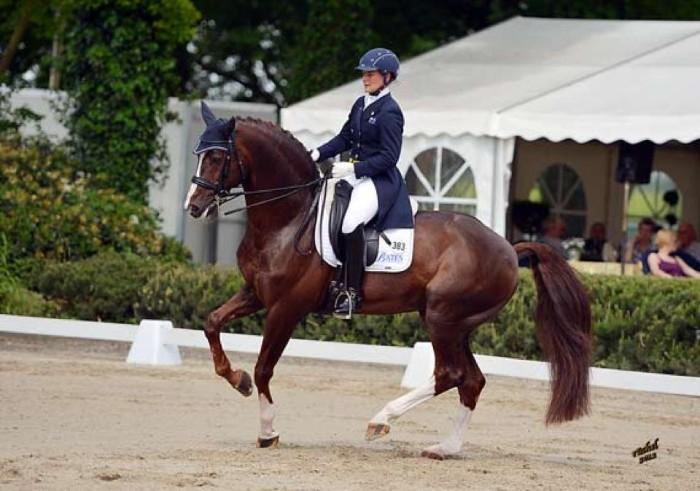 Broodmare Proven Olympic performance lines PPT