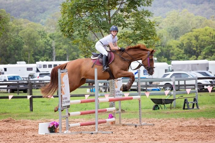 Quality Warmblood Broodmare for sale