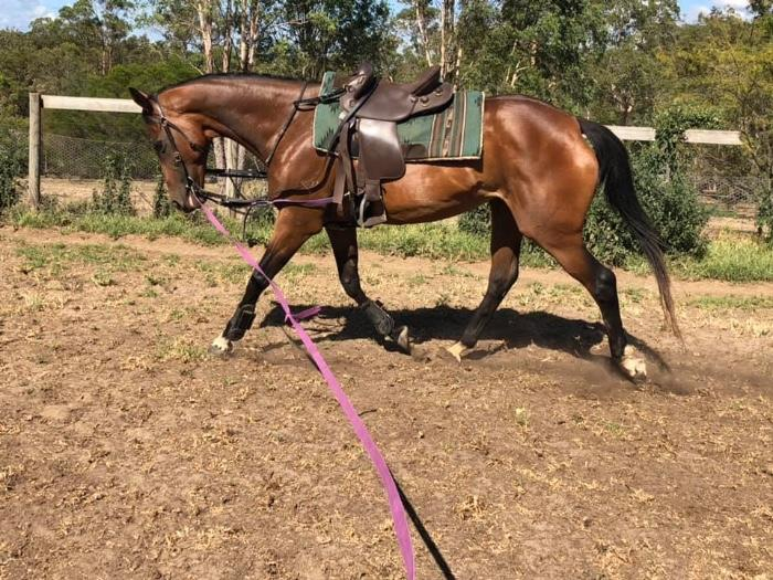 Gorgeous unraced Mare