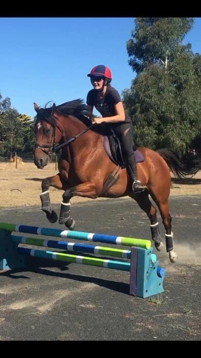 CURRENTLY ON LEASE - Sale or lease - show jumper