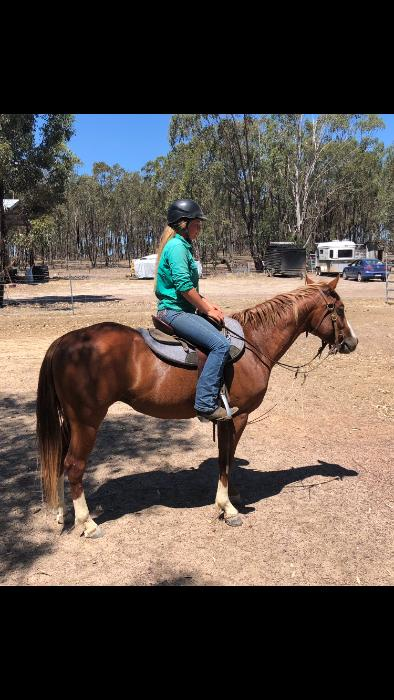 Genuine Gelding with Bling