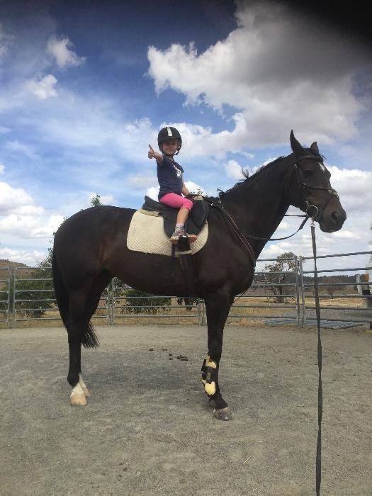 Medium trained dressage/eventer