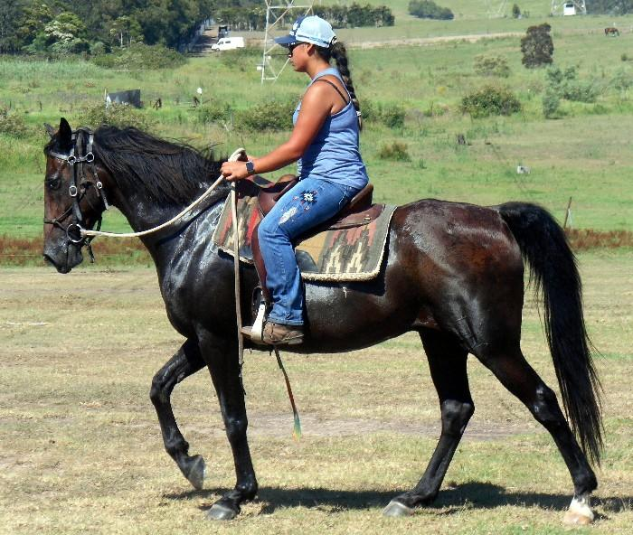 One For The Nervous Riders QH X Gelding + VIDEO++