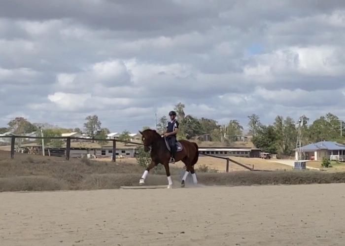 Talented Warmblood Mare !!!!