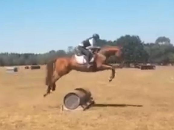 Exciting young eventer/show jumper