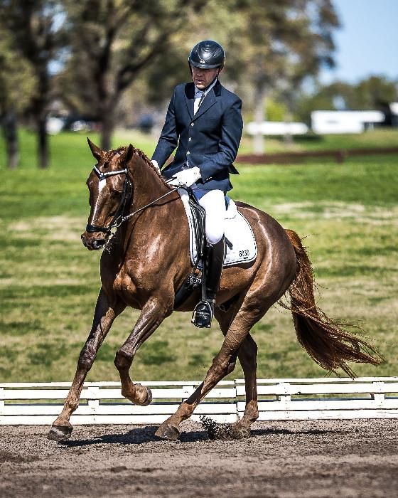 Elegant Royal Hit Gelding