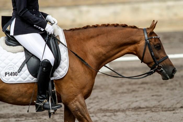 ADVANCED DRESSAGE PONY