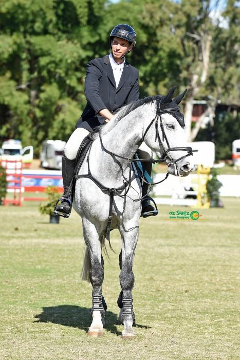 Warmblood showjumping import