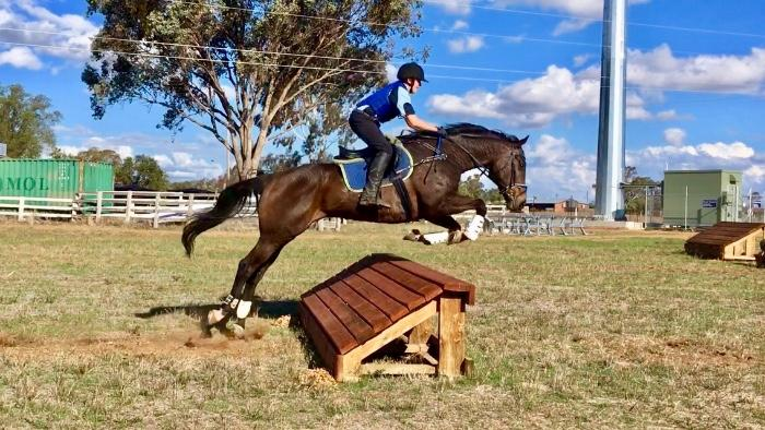 Big, Bold Thoroughbred Gelding - Event & Pony Club