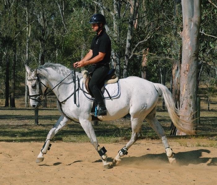 EXPERIENCED WARMBLOOD ALLROUNDER