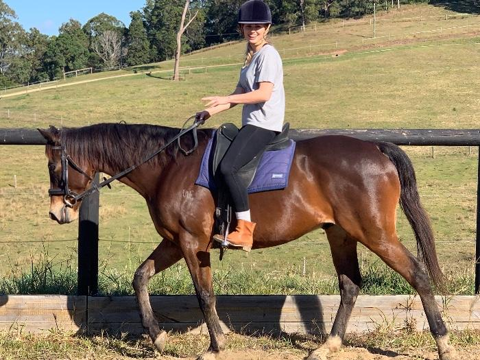 Kind Quiet T/Bred Gelding