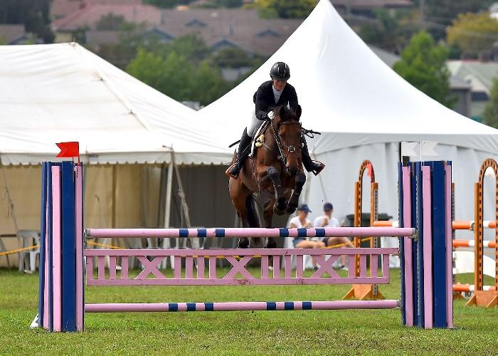 Uncomplicated Eventer with many 1* wins