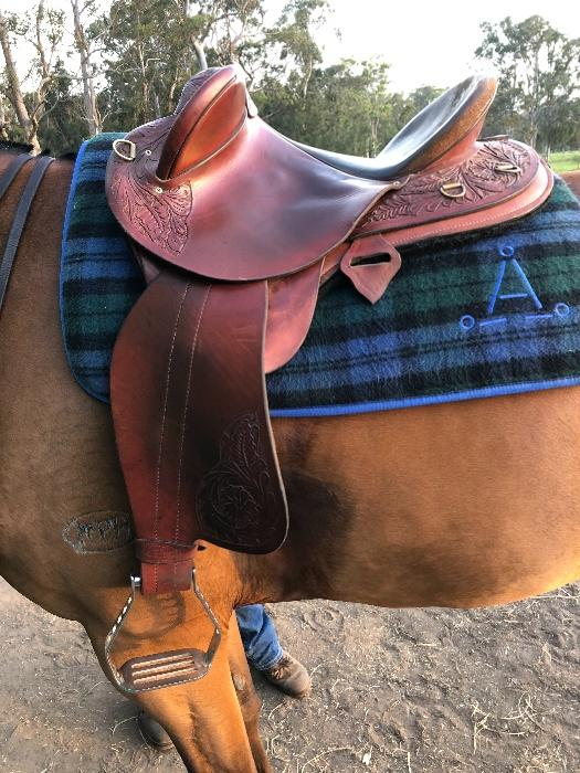 Southern cross saddlery competition halfbreed