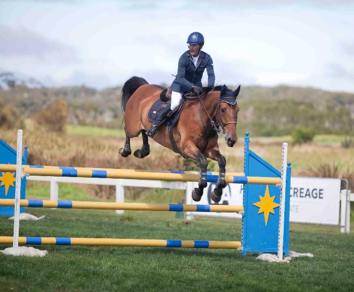 Competitive showjumper with exceptional breeding