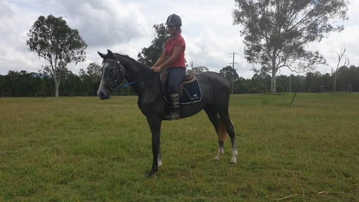 WARREGO STILETTO - 3yo Warmblood Mare