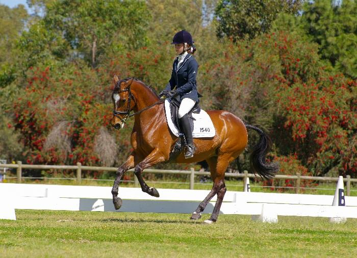 Medium/Advanced Dressage Pony