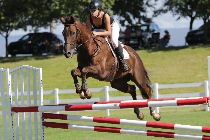 COMPETITIVE SHOWJUMPER REDUCED
