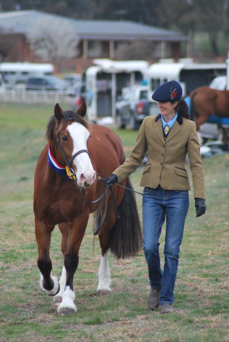 15hh Nawarrah Park Welsh Cob Section D