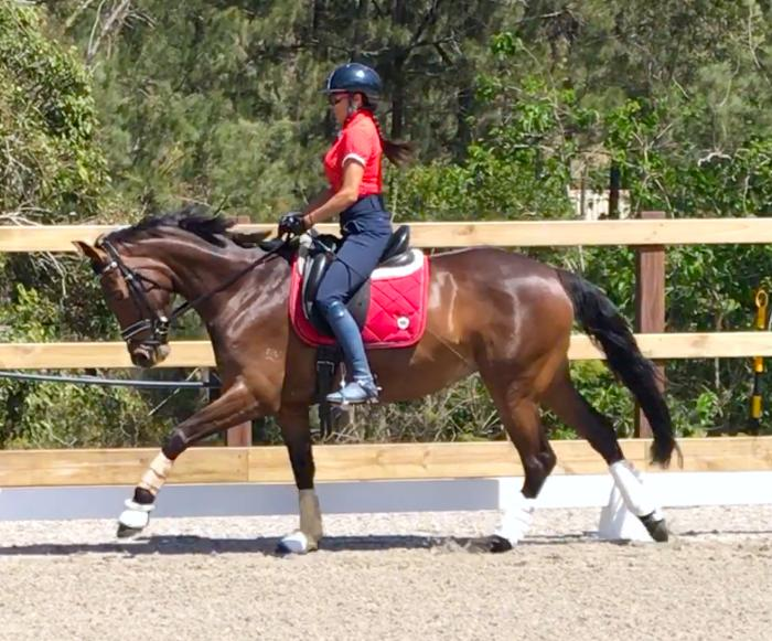 Warmblood Dressage/Eventing Mare by Furst Grandios