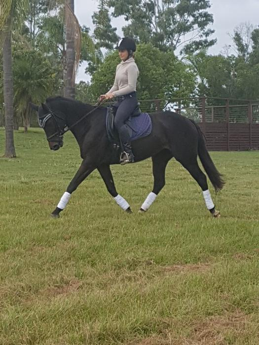 Lovely quiet dressage/allrounder