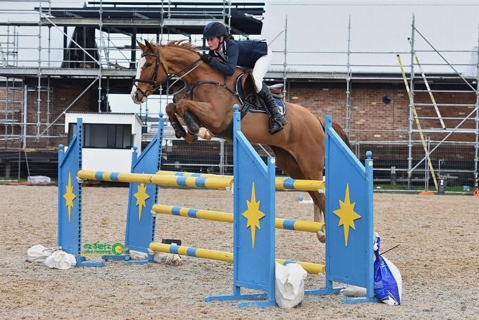 Super flashy & talented show jumping/eventing mare