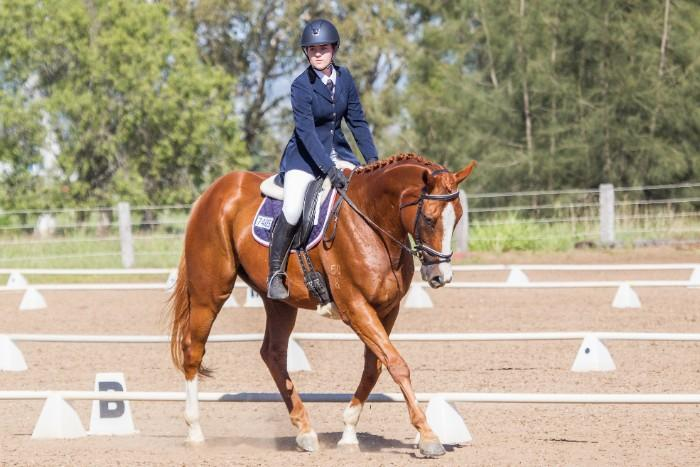 Quiet Safe Interschool Pony Club Allrounder