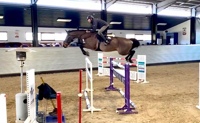 Scopey Showjumper
