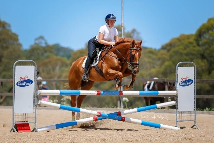 Eventing, show jumping or ladies horse