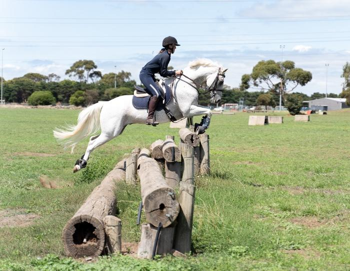 Exceptional Show Jumper